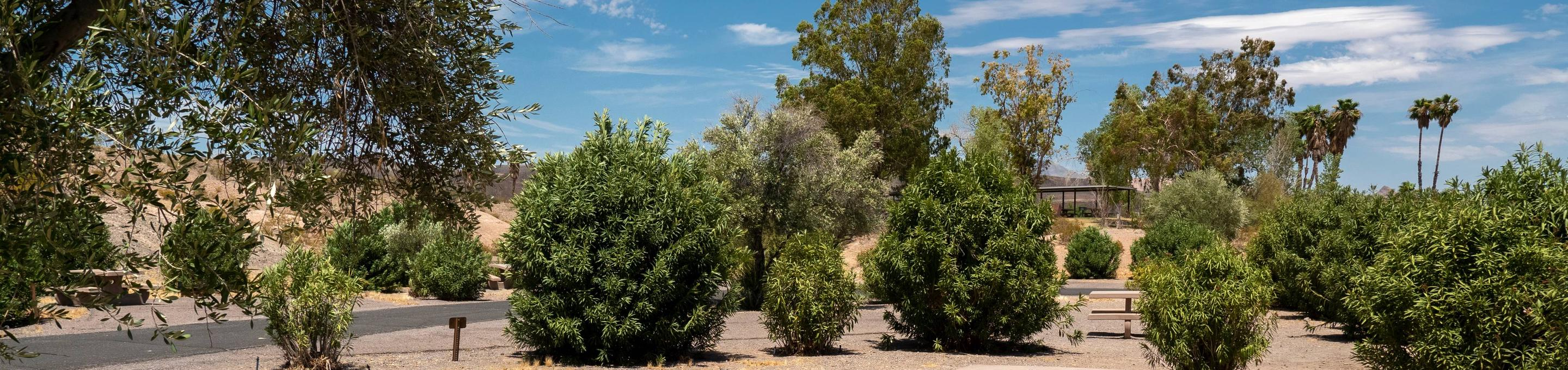 Campsite located in a desert settingCallville Bay Campground is a beautiful campground located in a desert setting