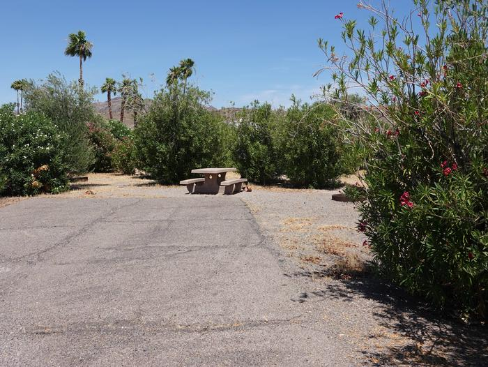 Campsite located in a desert settingCallville Bay Campground Site 8