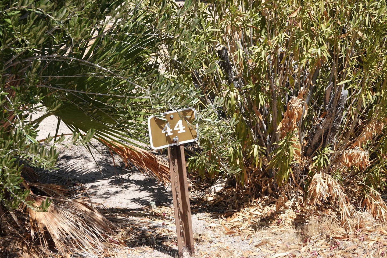 Campsite located in a desert setting1Callville Bay Campground Site 44