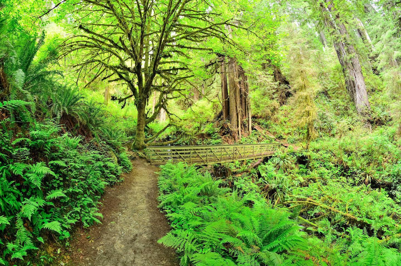 Trillium Falls TrailA short walk leads visitors to a series of small cascades.