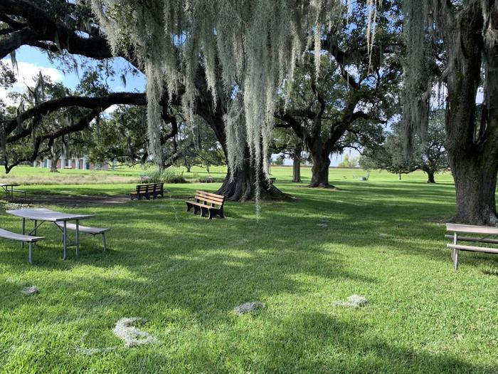 Picnic Under Live OaksTake a break beneath our large live oak draped in spanish moss
