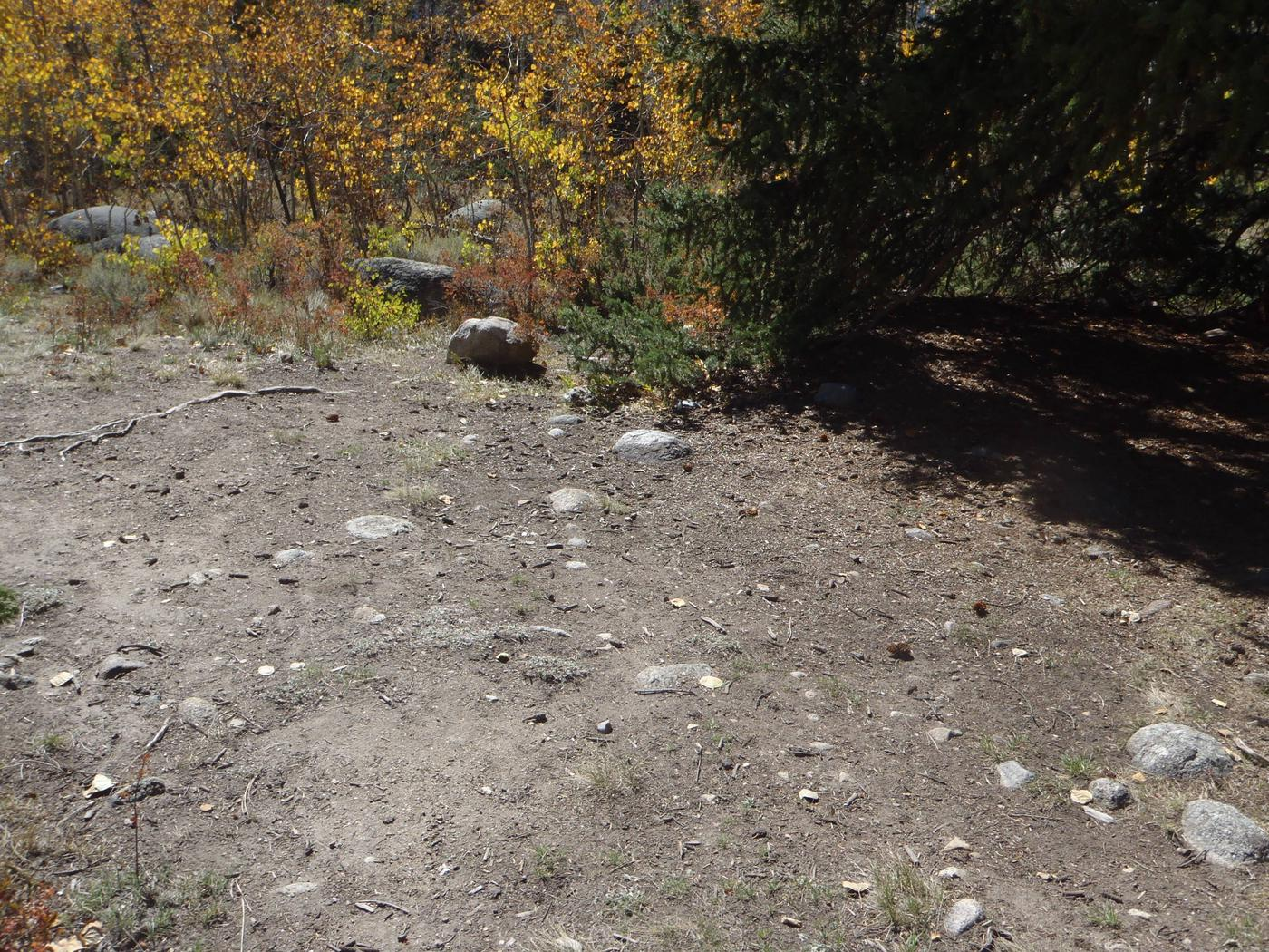 Lakeview Campground, site D4 clearing