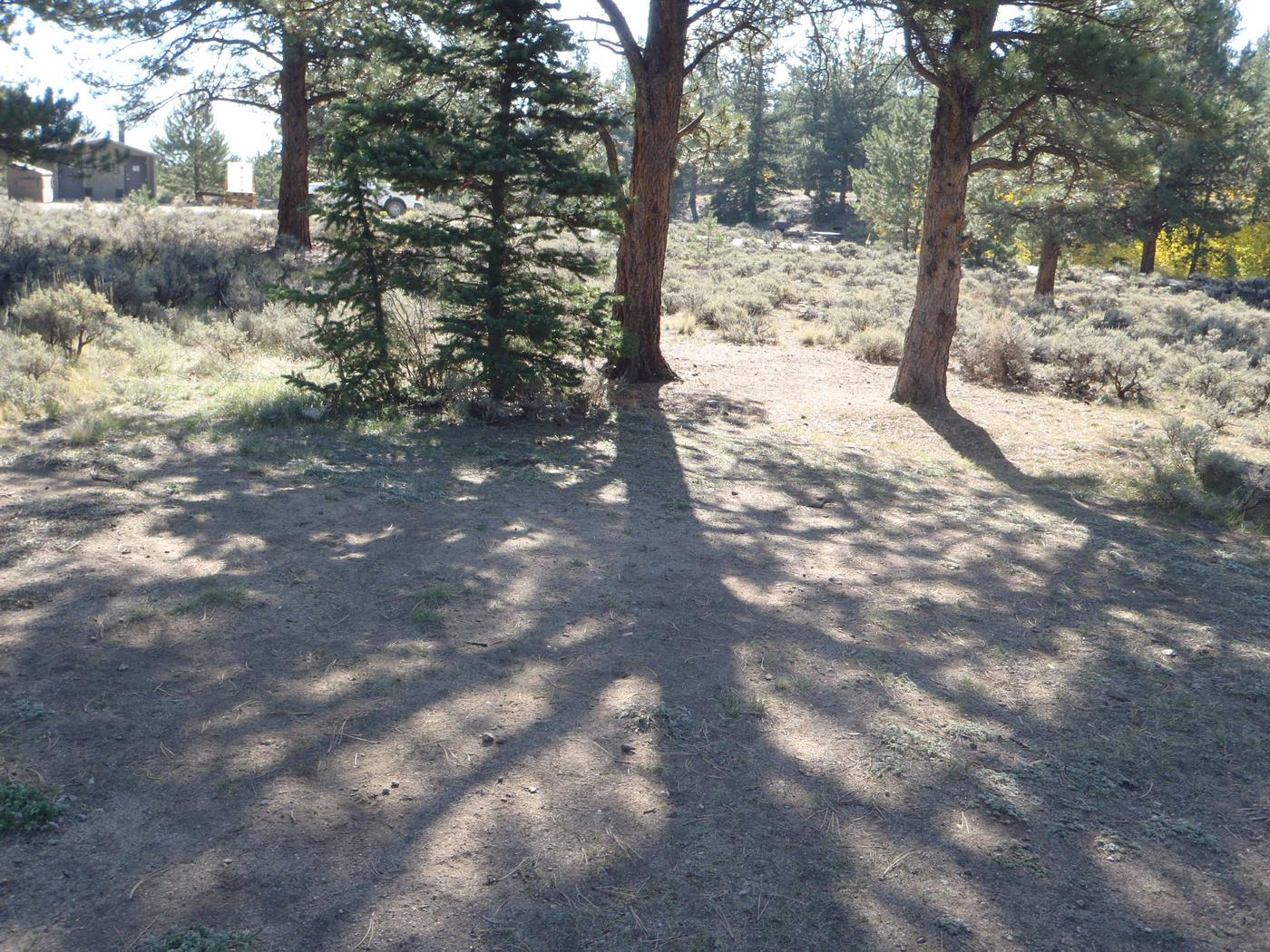 White Star Campground, site 55 clearing 2