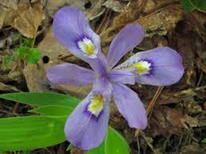 Native PlantsNative flowers found on the battlefield trails