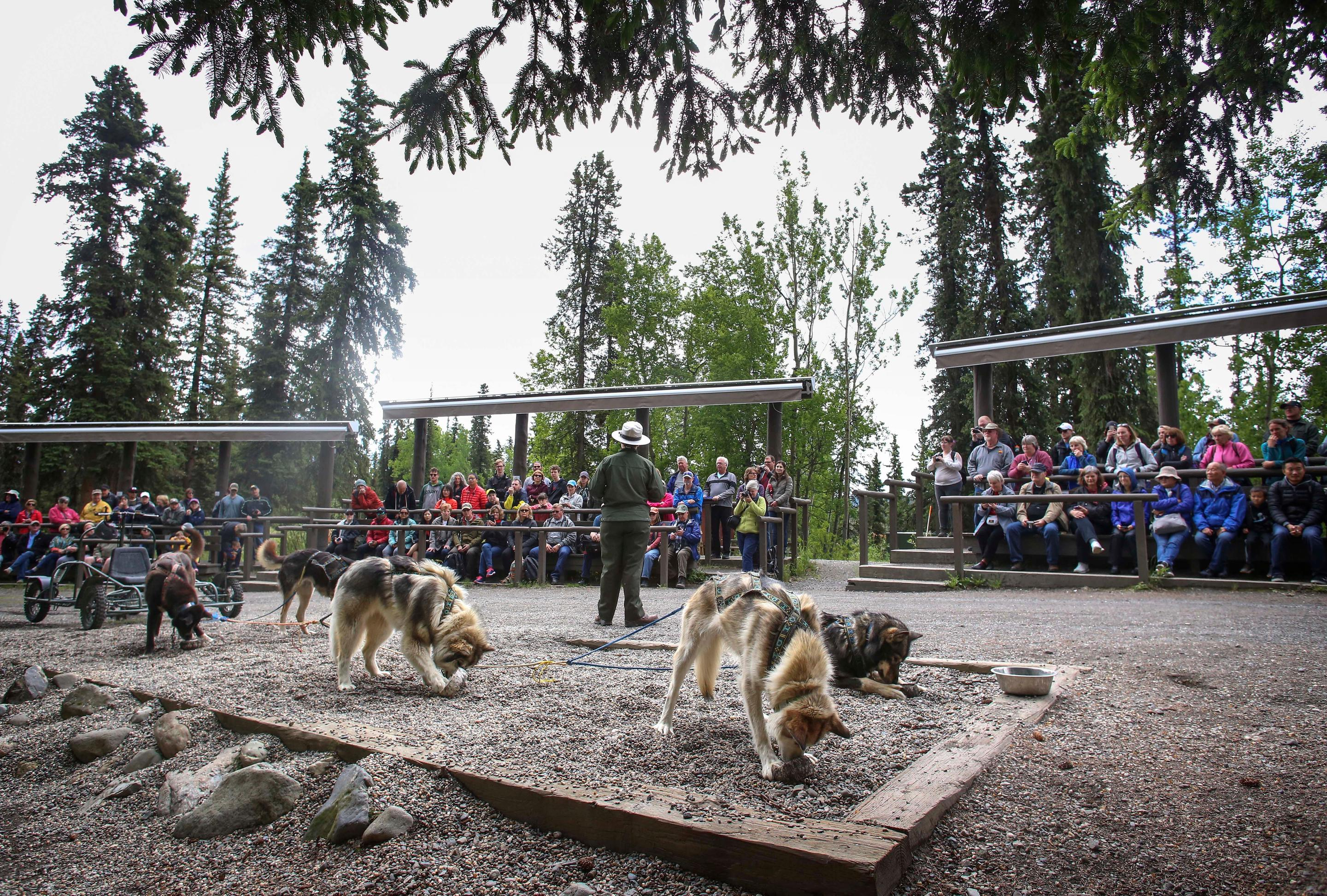 Sled Dog DemonstrationA crowd takes in a sled dog demonstration in the Denali Park Kennels