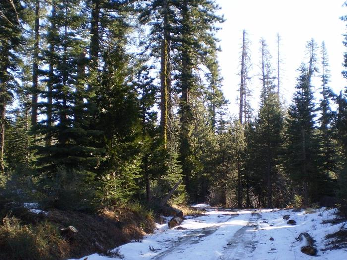 Preview photo of Eldorado National Forest Christmas Tree Permit