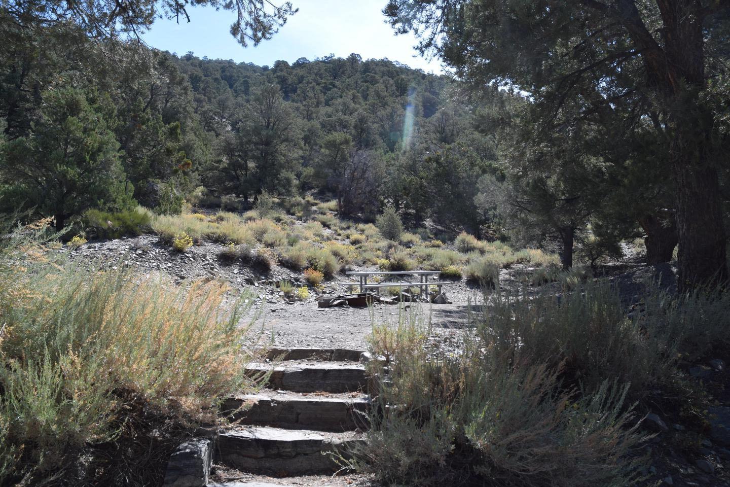 Thorndike CampgroundThis primitive campground is within a pinyon pine and juniper forest.