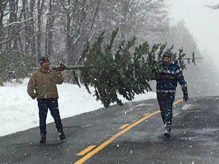 Preview photo of Lake Tahoe Basin Management Unit Christmas Tree Permit