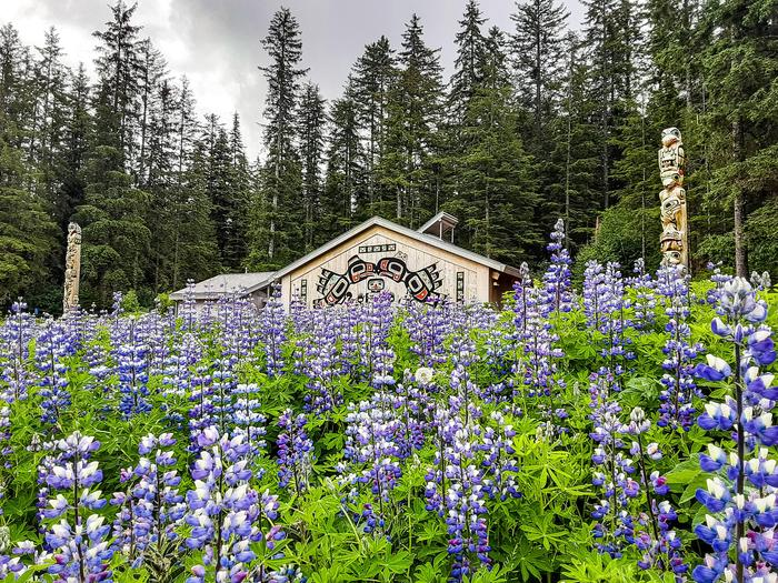 Huna Tribal House and Lupine WildflowersThe Huna Tribal House is a place of cultural significance in Glacier Bay