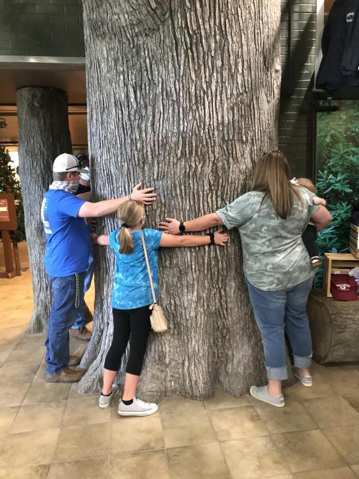 Behemoth Size Trees