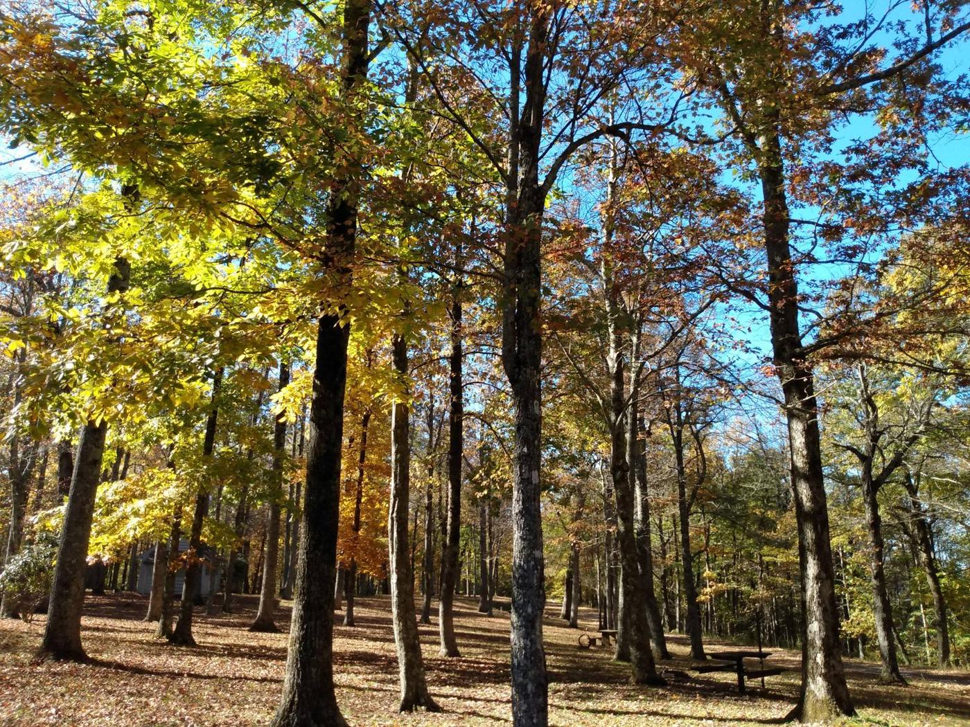 Peaceful fall day.The quiet peacefulness appeals to all who discover this campground.