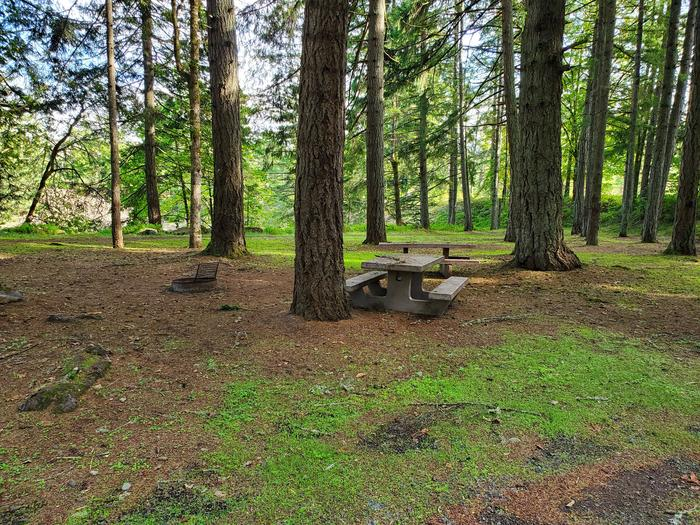 Site 55D picnic tables and fire ringSite 55D