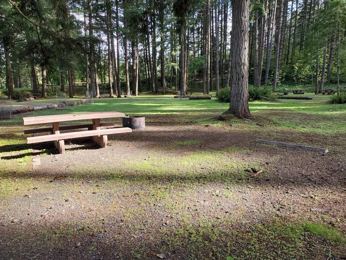 Site 80 picnic table and fire ringSite 80