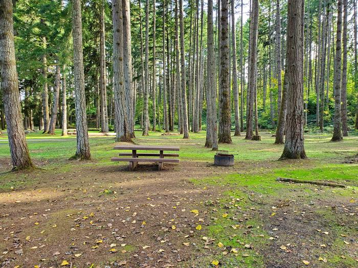 Site 81 picnic table and fire ringSite 81