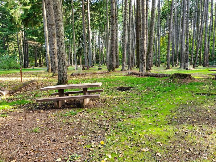 Site 82 picnic table and fire ringSite 82