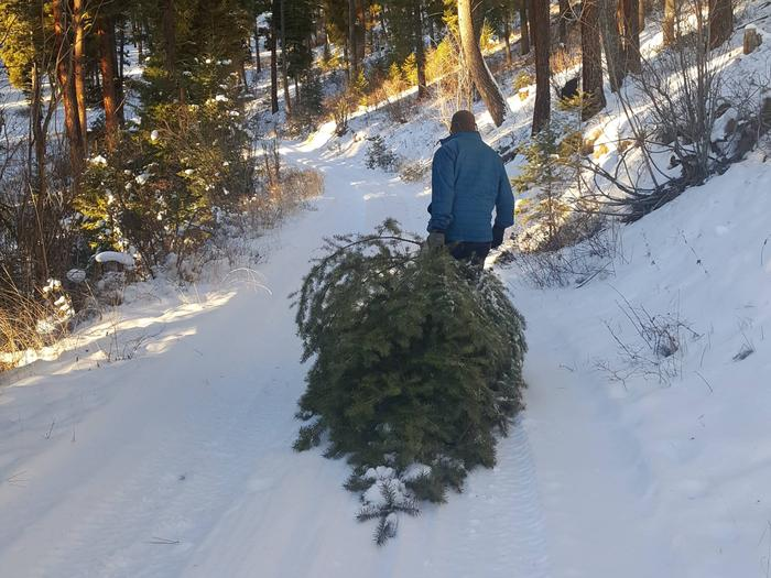 Preview photo of Salmon-Challis National Forest Christmas Tree Permit