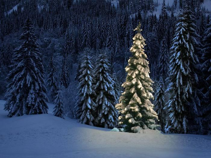Preview photo of Okanogan-Wenatchee National Forests Christmas Tree Permit