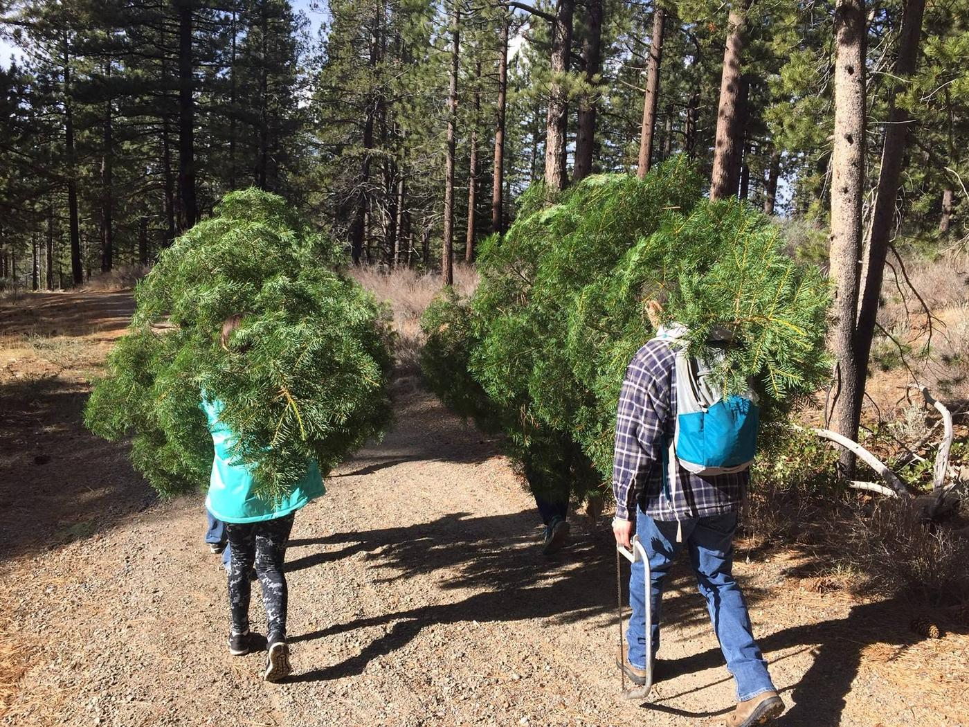 People carry their Christmas trees.Visitors carry their Christmas trees down a dirt road.