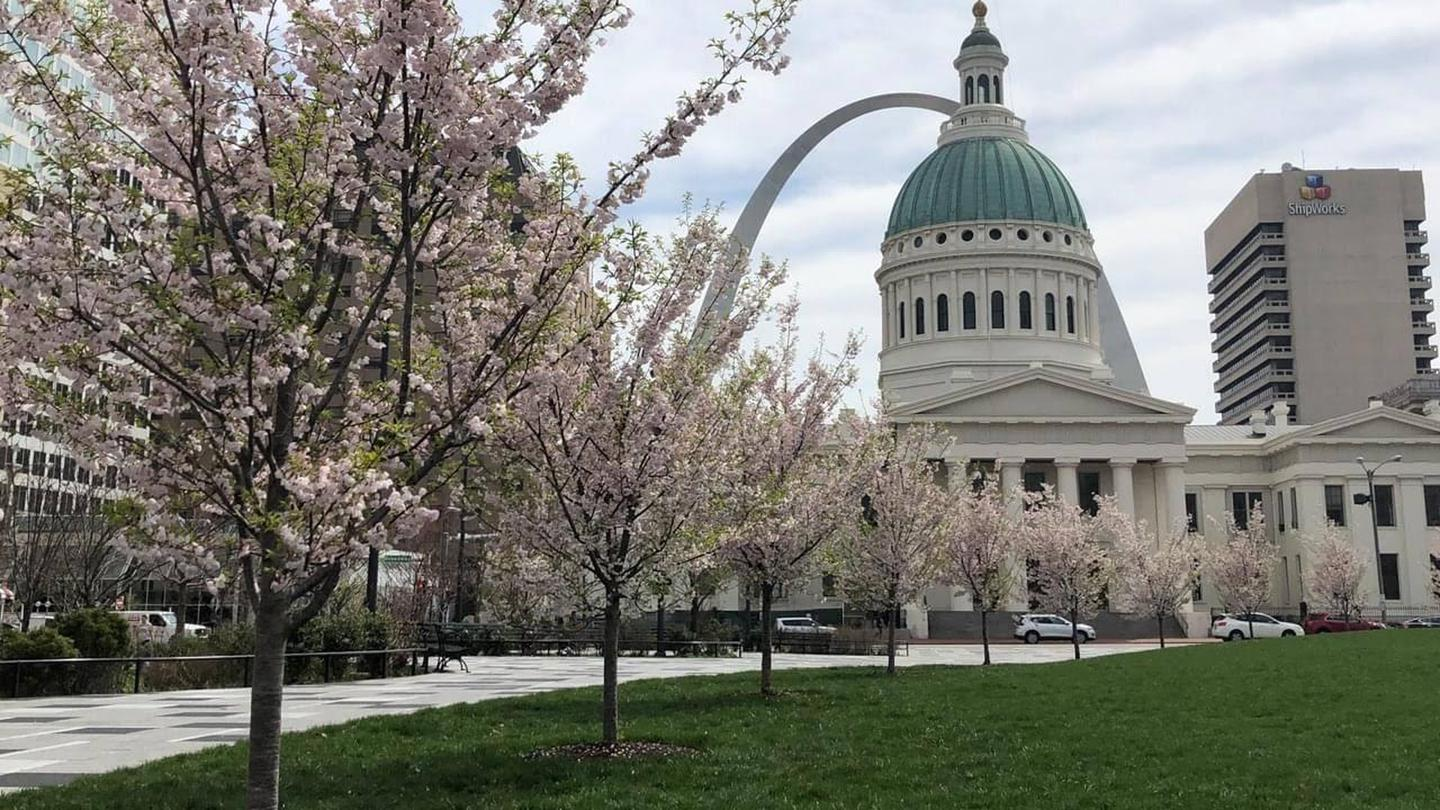 Cherry trees in bloomThe blooming cherry trees in Kiener Plaza provide a wonderful foreground for the Gateway Arch and Old Courthouse in spring.