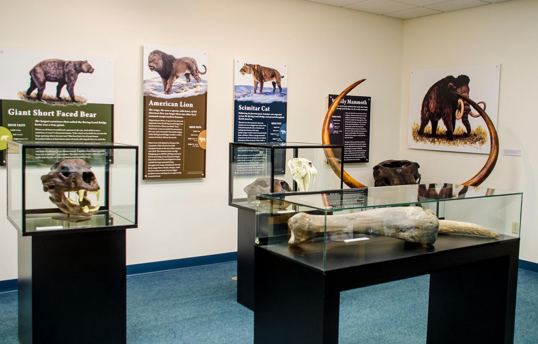 Visitor Center Ice Age SkullsIce Age exhibit at Bering Land Bridge National Preserve.