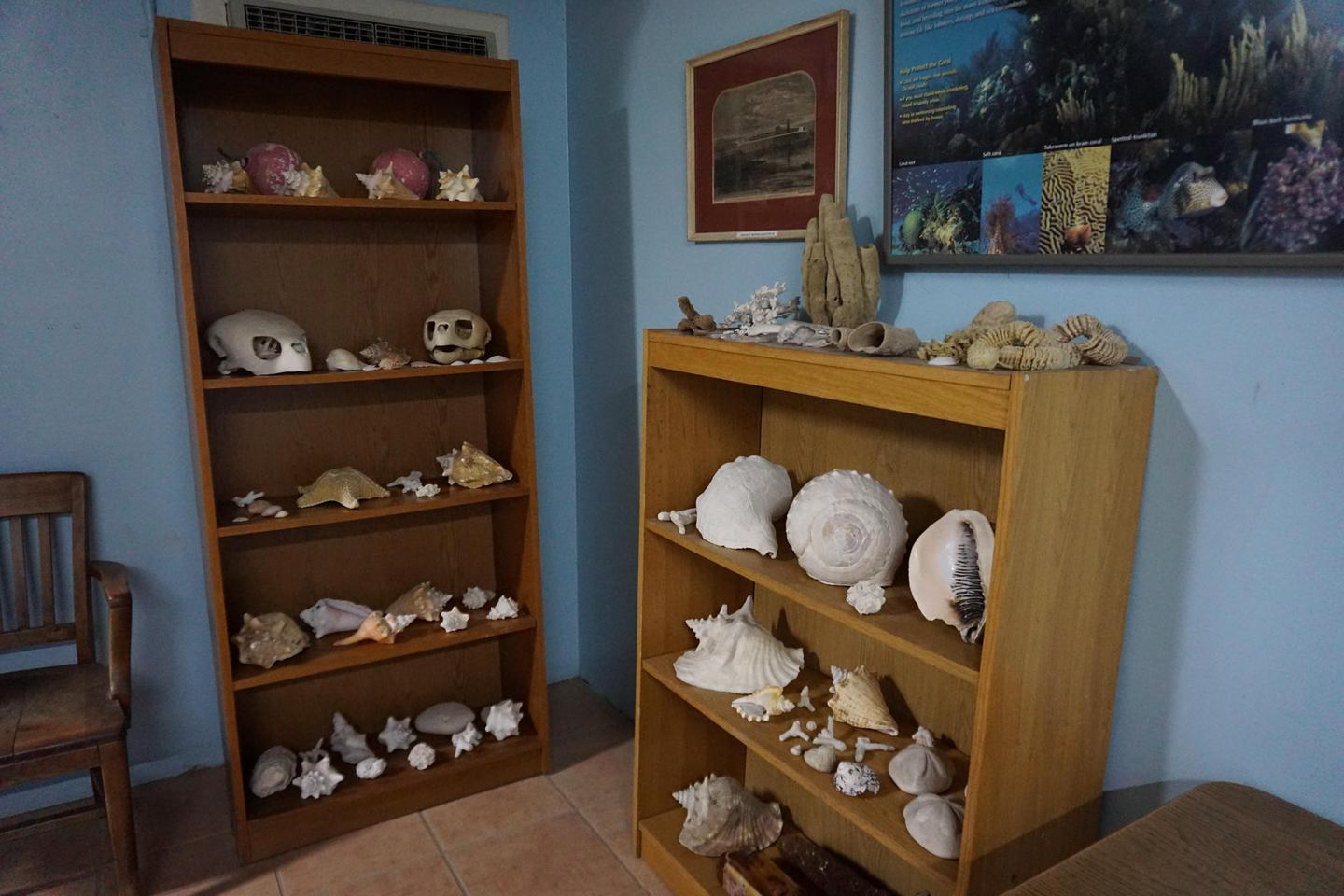 Garden Key VC Bookcase DisplayDisplay cases in the Garden Key Visitor Center highlight sea artifacts