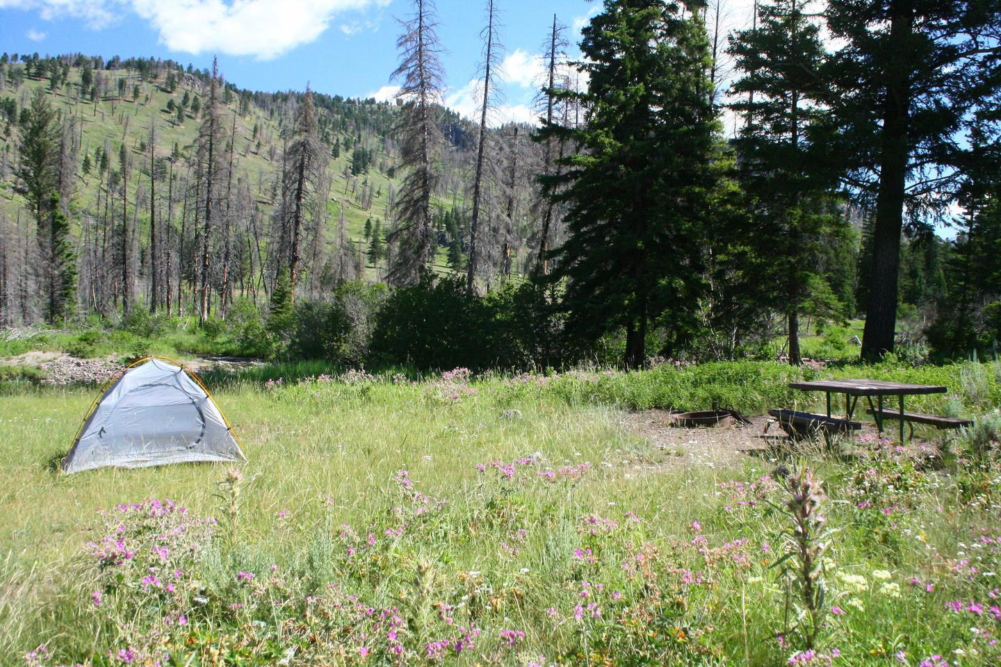 Slough Creek Campground Site #4