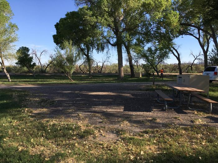 Flat shaded site with bear box, raised grill, and picnic table