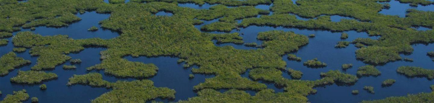 An aerial view of a maze of water and mangrove tree islandsAerial view of the Marjory Stoneman Douglass Wilderness in Everglades National Park