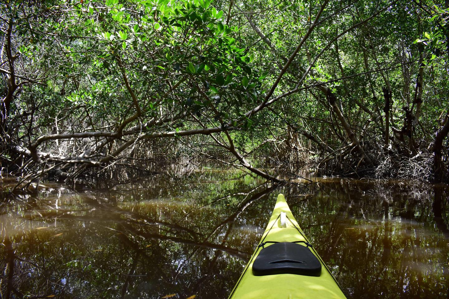 A yellow kayak paddles through a mangrove tunnel with numerous branches overheadPaddling a mangrove tunnel