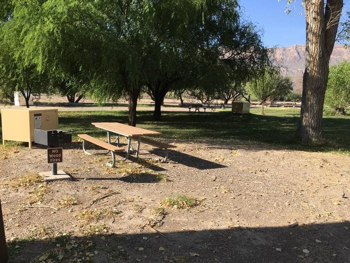 Partially shaded, flat site among the Cottonwood trees