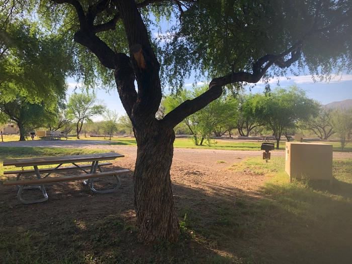 Tree in foreground with picnic table well shadedFlat, partially shaded site with picnic table, bear box and grill.