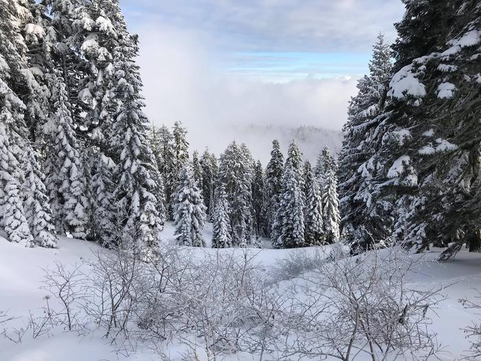 Preview photo of Klamath National Forest Christmas Tree Permit