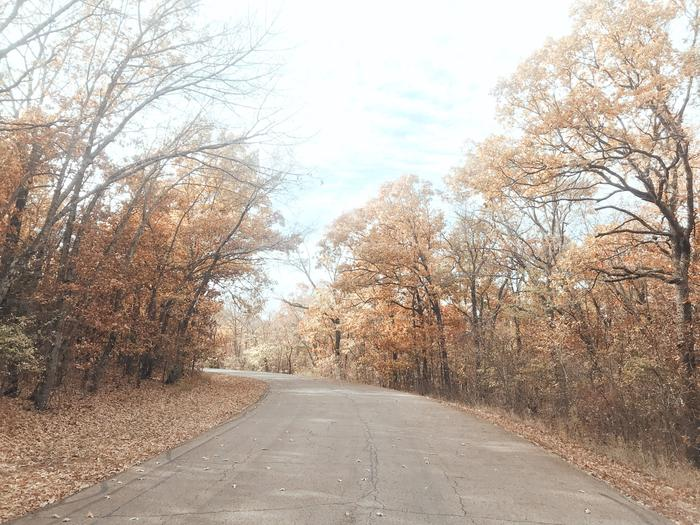 Redbud Bay entry road in the fall