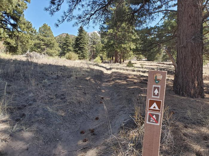 A fiberglass sign marking a sandy trail surrounded by scattered pine trees near the Escape Dunes campsite.While hiking along the trail, this sign marks that you are about to arrive at the Escape Dunes campsite.