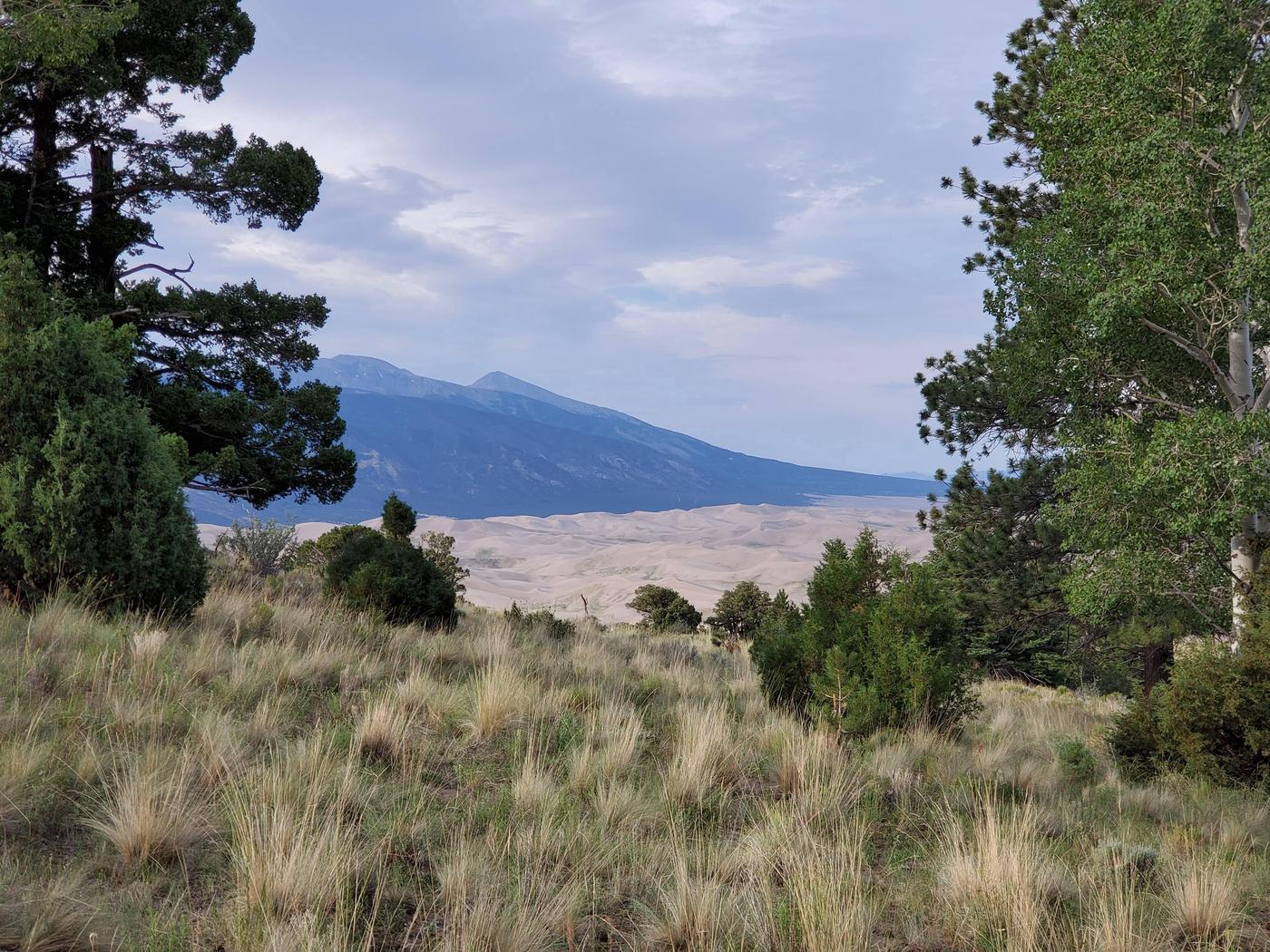A view of the dunes flanked by aspen and pine trees with the Sangre De Cristo Mountains rising in the background.Aspen is the highest elevation backcountry site, allowing for spectacular views of the dunes and the San Luis Valley.