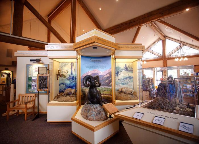 Bighorn Sheep at Fall River Visitor Center