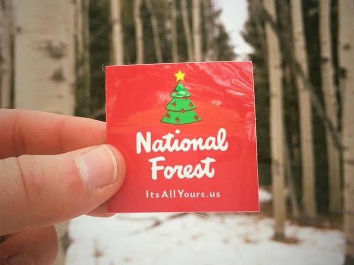 It's All Yours Christmas tree sticker in front of forest backdrop.