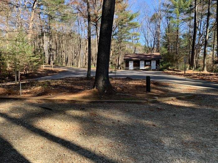 Large pine tree and bathroom access across from site Site 1 proximity to bathhouse