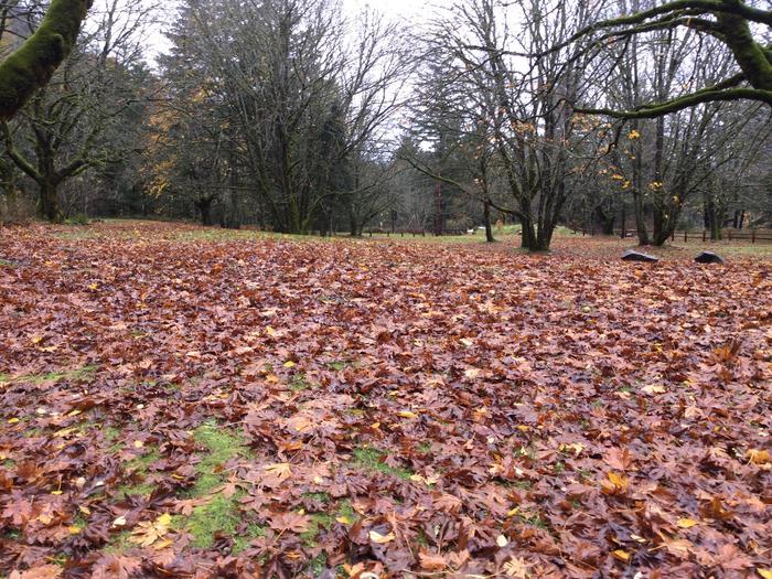 Wyeth grassy area
