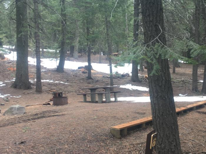 Spring Creek Campground Site 6 - forested site in evergreen treesSpring Creek Campground Site 6