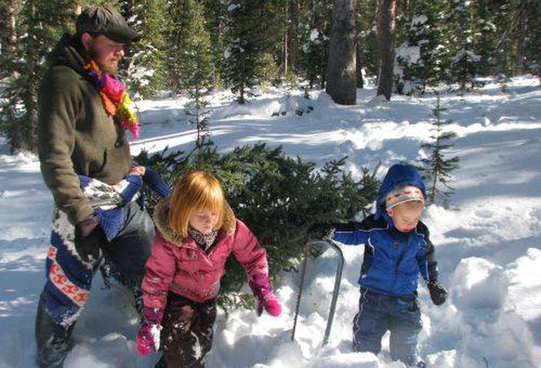 Searching for a Christmas TreeChristmas Tree