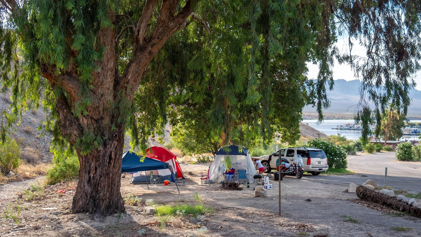 Cottonwood Cove CampgroundCottonwood Cove Campground in a lakeside desert setting at Lake Mead NRA