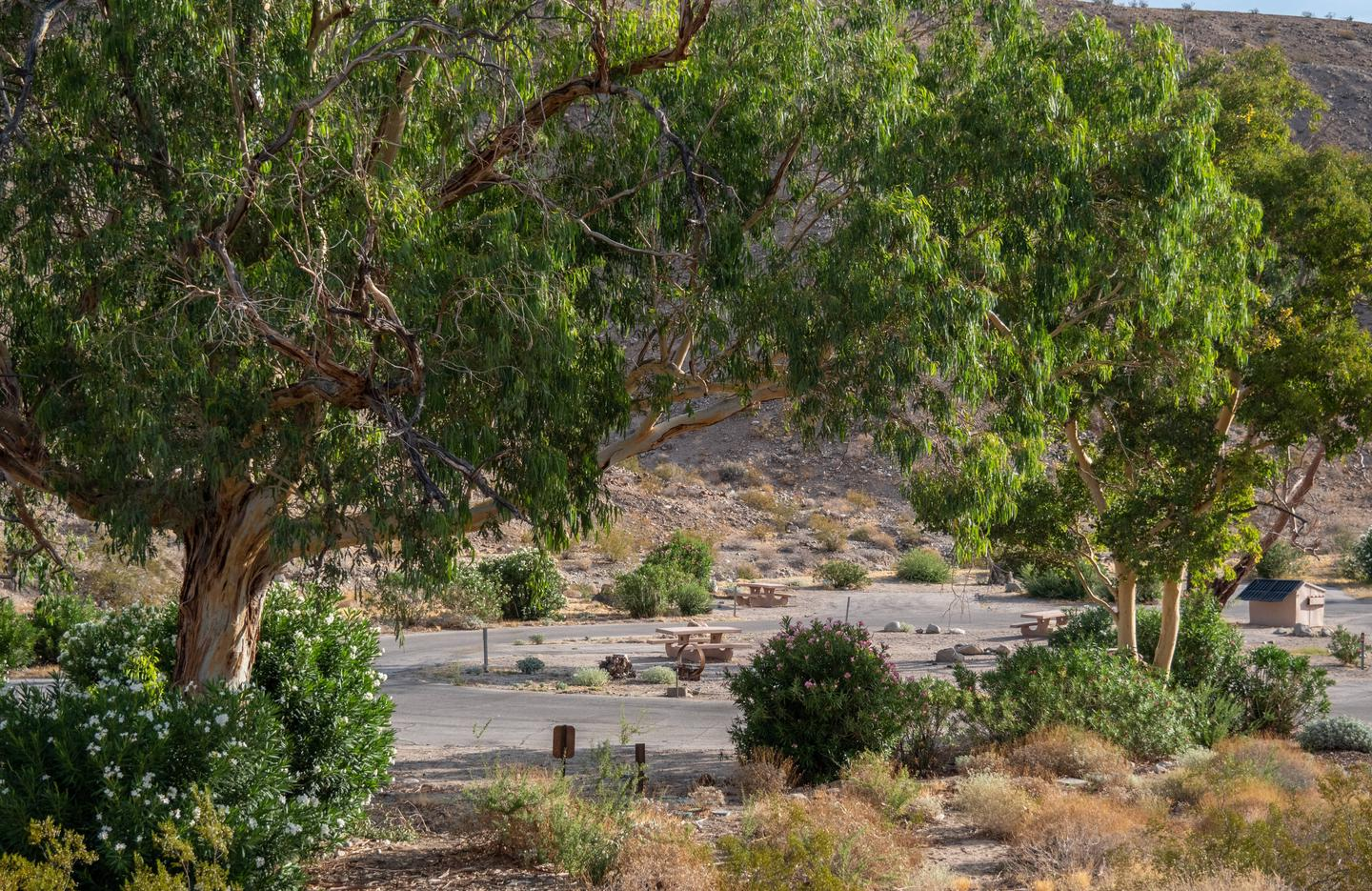 Cottonwood Cove Campground 2534Cottonwood Cove Campground