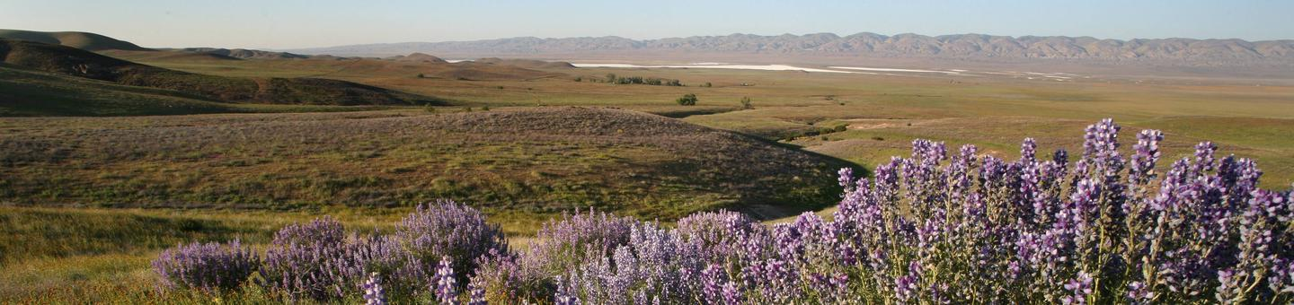 View of Carrizo Plain, Soda Lake in Distance