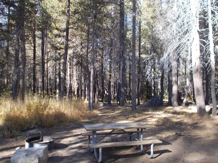Food locker, picnic table, and fire ringSite 14