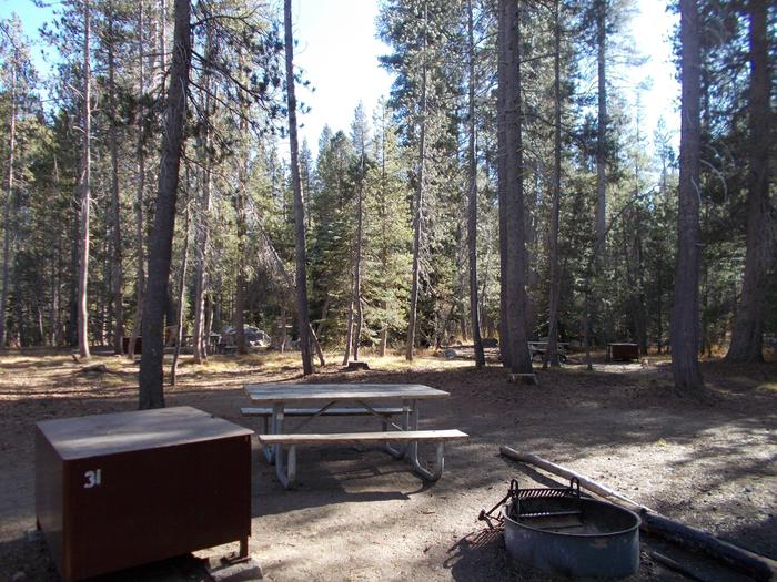Food locker, picnic table, and fire ringSite 31