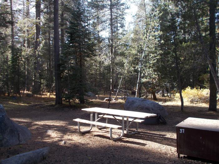 Food locker, picnic table, and fire ringSite 37