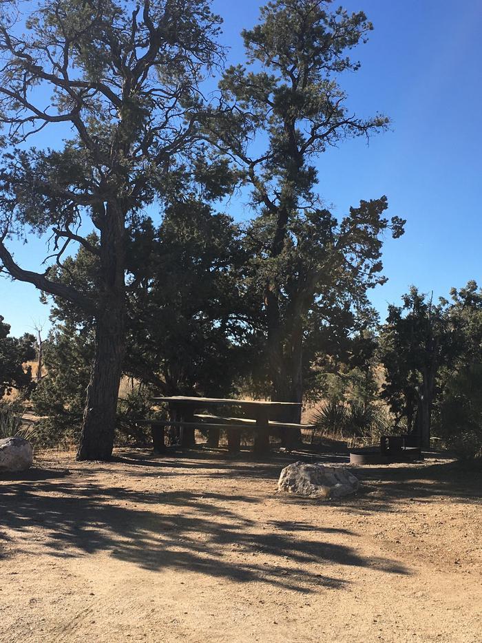 Mid Hills 2A tall tree shades a picnic table at a Mid Hills campsite