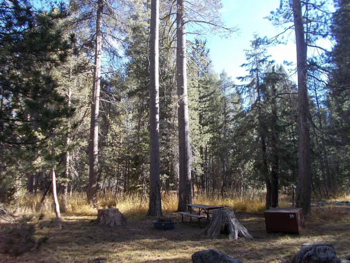 Food locker, picnic table, and fire ringSite 39