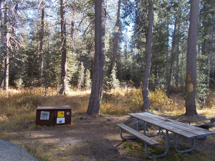 Food locker, picnic table, and fire ringSite 43